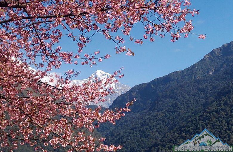 Tikhedhunga to Ghorepani trek distance, weather, elevation & map - Annapurna view from Ulleri